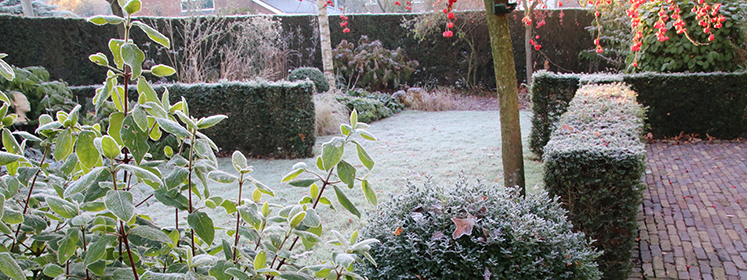 Winterplanten tips