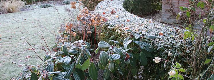 planten met rijp